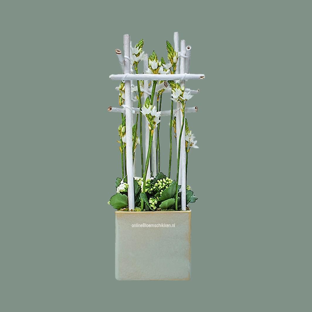 IB-113 | Moderne schikking met planten